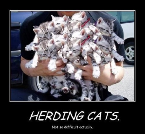 Herding Cats. Not so difficult actually.